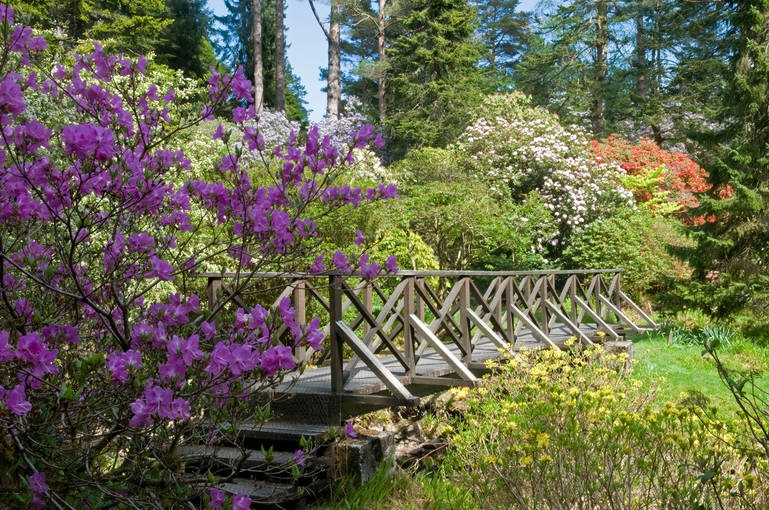 Crarae Gardens on Scotland's outstanding West Coast. Enjoy a dog friendly stroll.