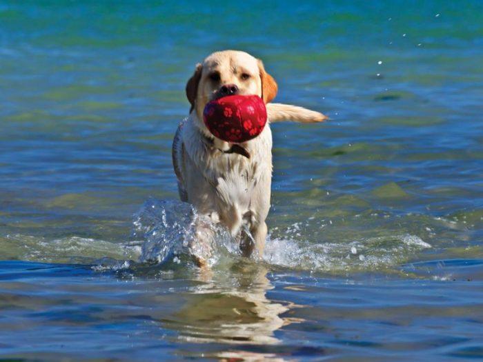 Making a splash in the sea, browse a superb range of dog friendly cottages in Devon