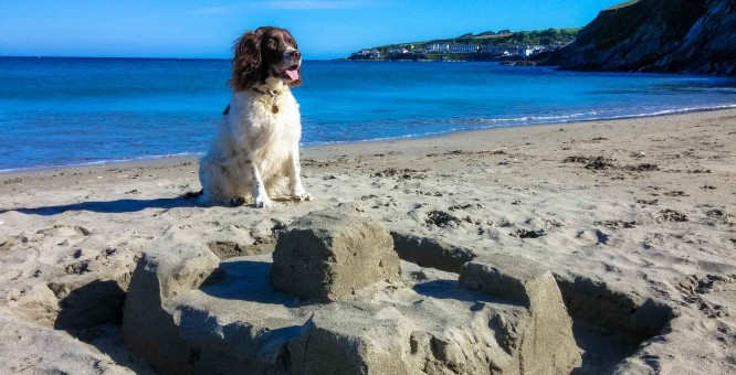 Dog Friendly Cottages, Cornwall