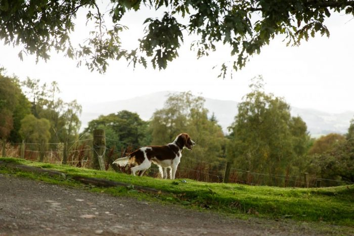 Dogs are welcome at Crieff Hydro self catering accommodation
