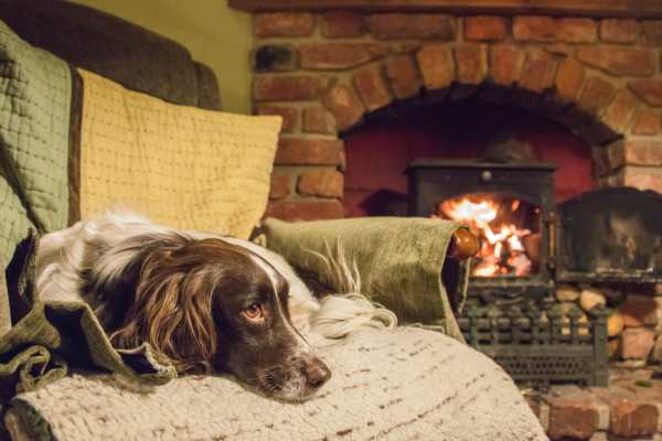 FIND DOG FRIENDLY COTTAGES