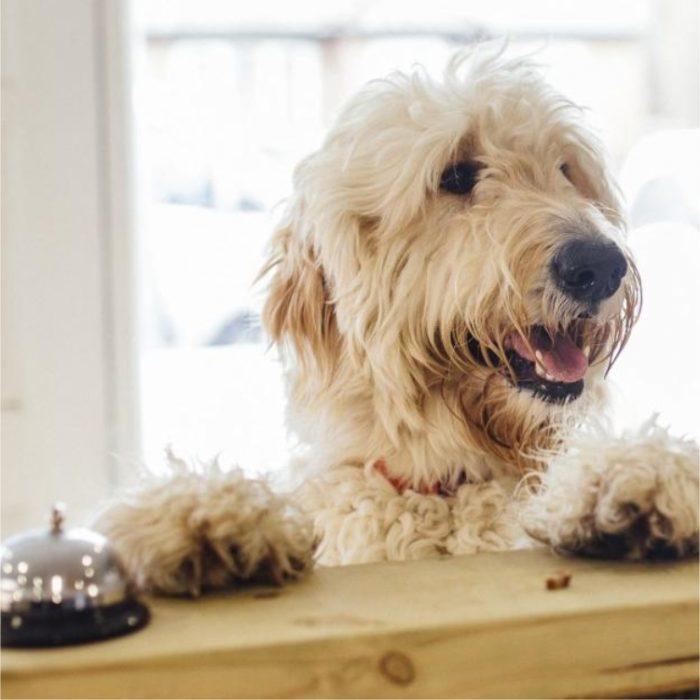 FIND DOG FRIENDLY HOTELS