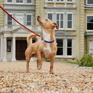 No need to leave your best friend at home. Mulberry Cottages offer a fantastic range of dog friendly cottages in England