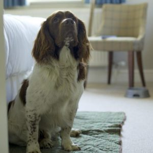 Dogs Welcome in Selected Bedrooms at the Bell Inn Hotel, Newforest, South East England