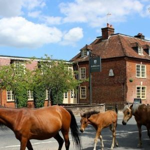 Wild ponies outside The Bell Inn, Dog Friendly Hotel, Newforest