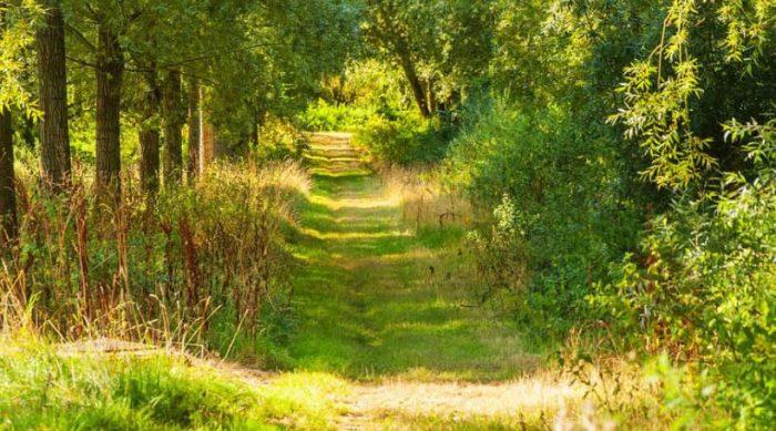 Woodland Walks, Essex