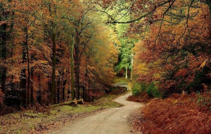 Enjoy a leisurely stroll with your dog through the Forest of Dean