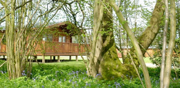 A South Winchester holiday lodge surrounded by a bluebell filled woodland