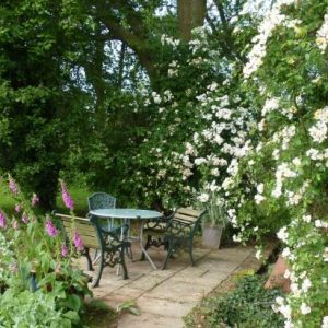 A beautiful garden setting with patio furniture, fox gloves, wild roses at Thatch Close Farm dog friendly cottages Heresfordshire