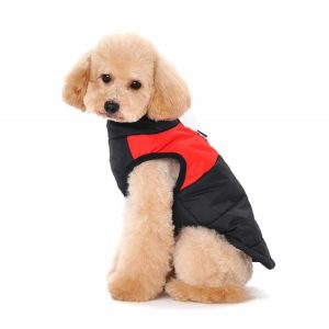 Ericoy puppy coat in navy and red won by a cute poodle pup.