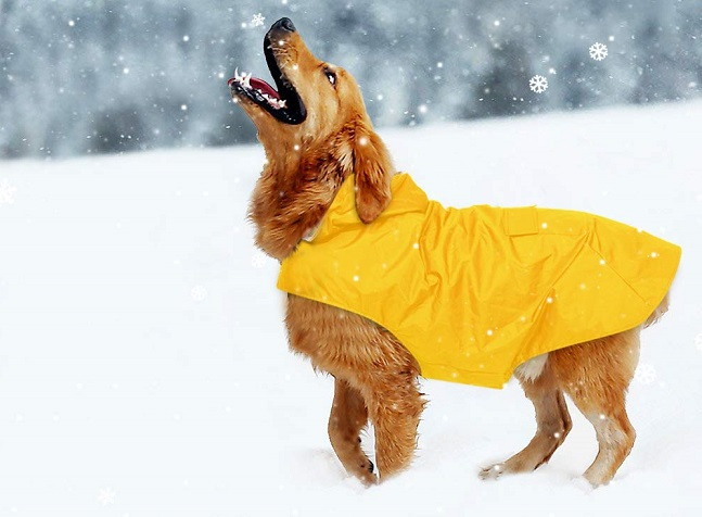 Zellar dog rain coat in bright yellow. Modelled by a golden retriever standing in snow and looking at the sky to catch snowflakes.