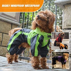 Lovelonglong dog coats with legs in green and blue. Worn by a brown cockapoo who looks very stylish.