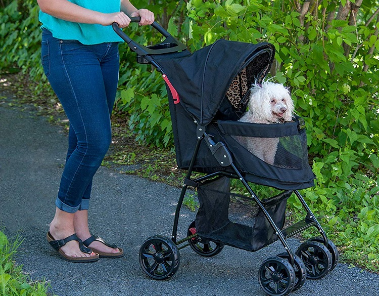 A poodle enjoying a walk outdoors from the raised seat of his dog pram.