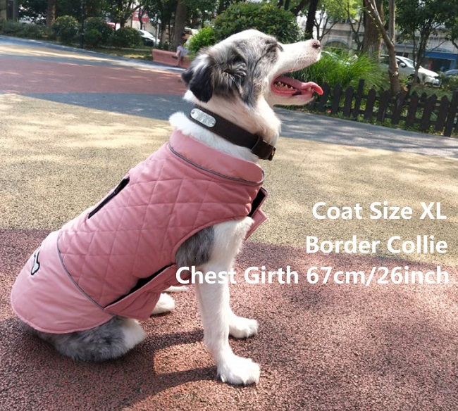 A collie wearing a stylish, pink, Rantow dog winter coat