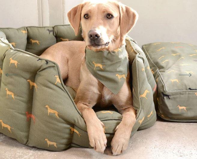 Sophie Allport Dog Bandanas. Pictured here is a beautiful golden labrador wearing a green dog motif dog bandana