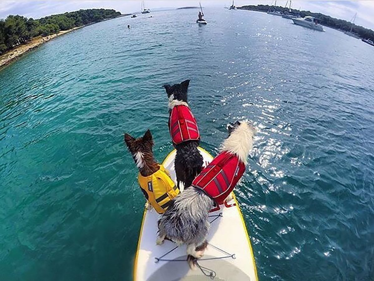 Dog life jackets in red and yellow worn by three dogs looking out to sea from a small boat - Ruffwear K9 float coat for large dogs