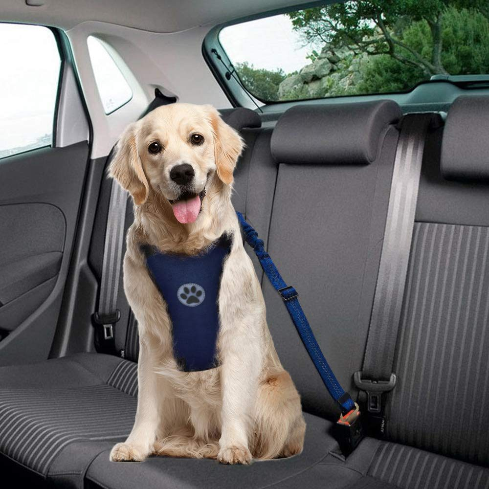 Slowton Dog Seat Belt in navy worn by a golden retriever sitting quite contentedly in the back of a car