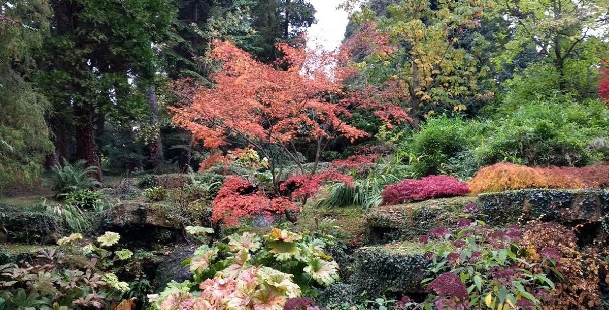 Batsford Arboretum, Cotswolds - beautiful red colors of trees in the Autumn