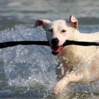 Top 5 Dog Friendly Places to visit in the Cotswolds
