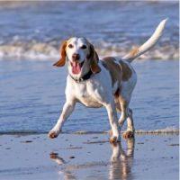 Dog enjoying a splash around on the beach