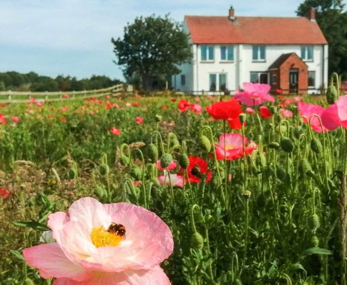 Lady Smith Holiday Cottage, Last minute rental, East Yorkshire