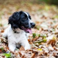 A dog lying on leaves and enjoying a Last Minute dog friendly break - October and Autumn 2021