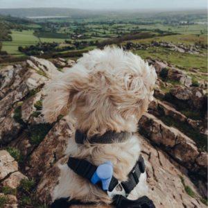 Dog enjoying the views over the Lake District